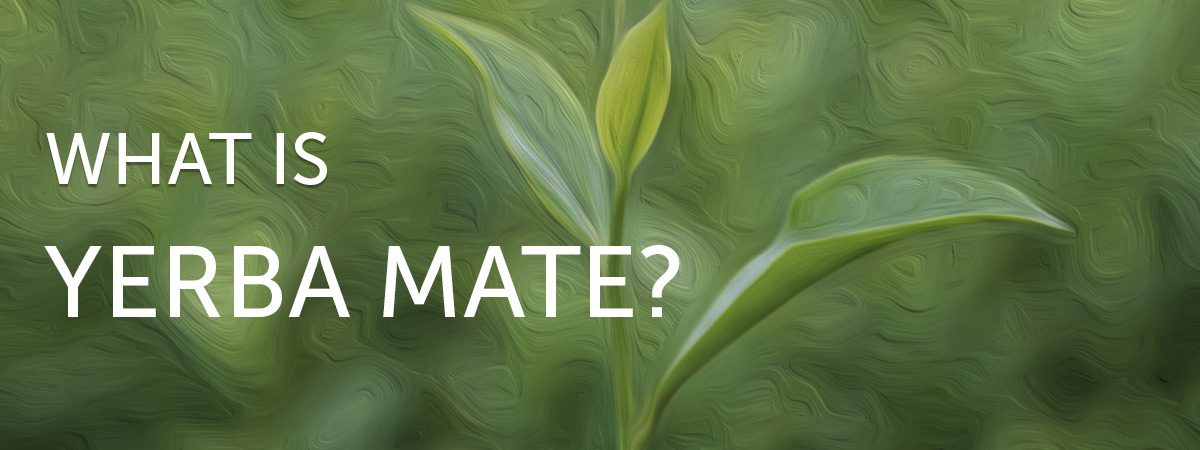 What is Yerba Mate?