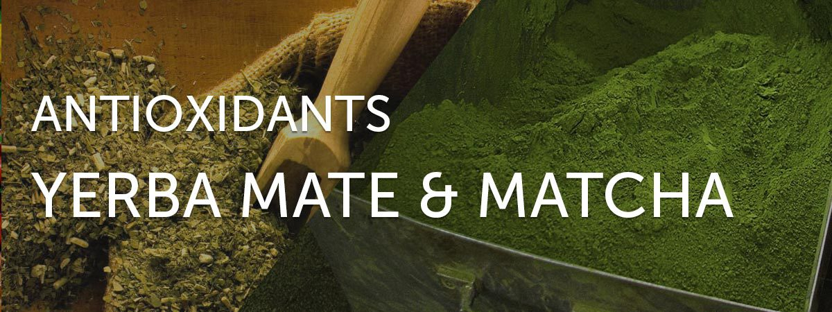 antioxidants in yerba mate and matcha green tea